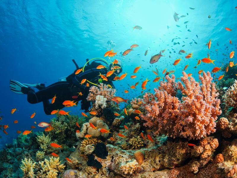 Croatia scuba diving
