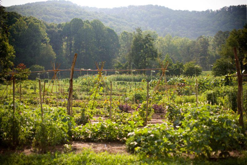Blackberry Farm Garden