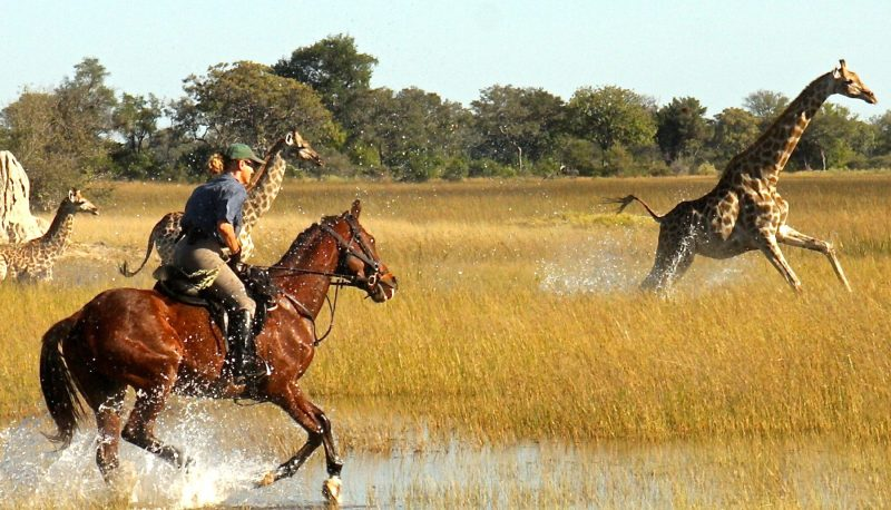 African safari horse back riding