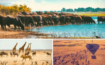 Africa photos