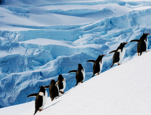10 Hidden Gems And Must-See Sights In Antarctica