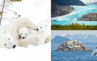 Alaska polar bears and glaciers