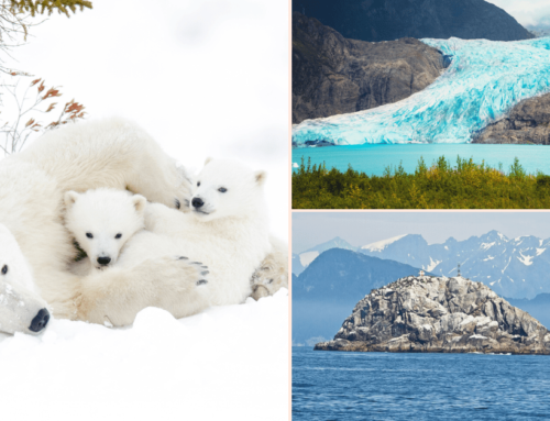 How To Plan An Alaskan Land Adventure – Top Sights And Experiences