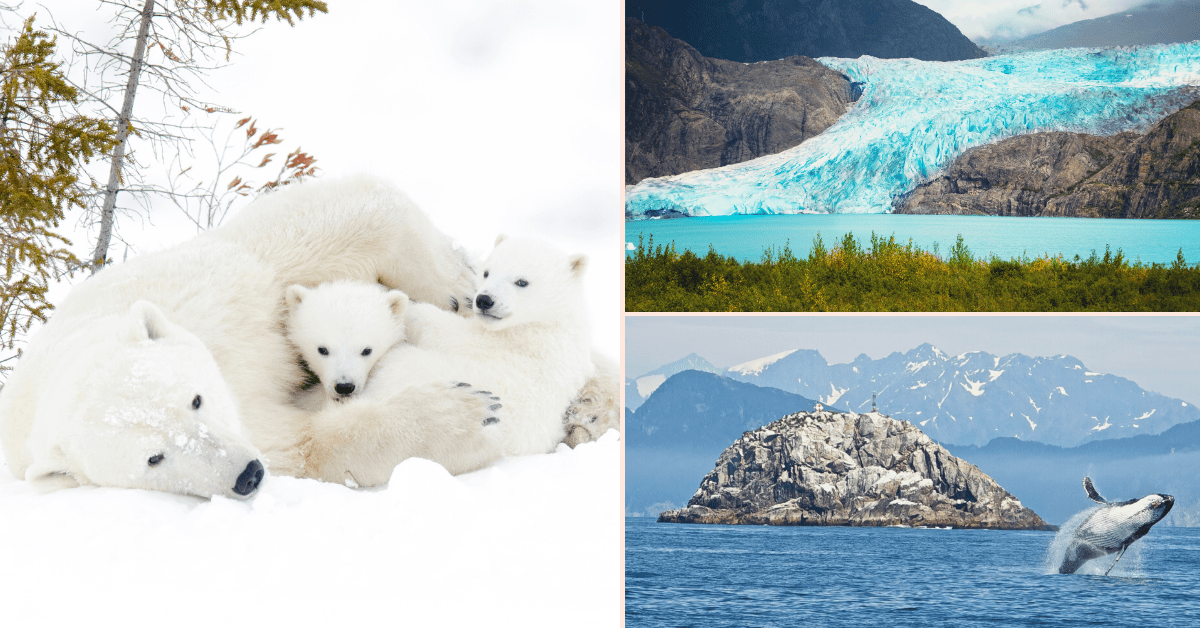 Alaska polar bears and glaciers