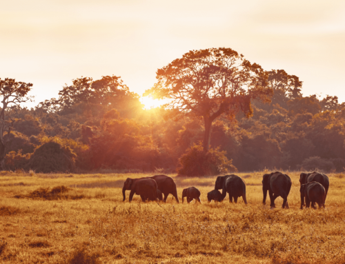 10 Important Things To Consider When Planning An African Safari