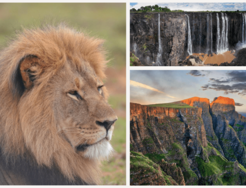 Into Africa: Planning the Perfect Luxurious African Safari